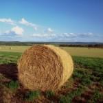 Agricoltura_balla_di_fieno