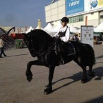 cavalli (Small)